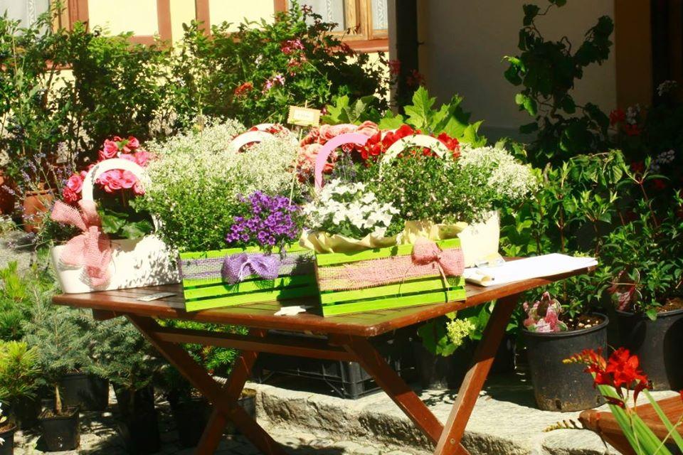 Artemisia – Mostra di piante e fiori di montagna